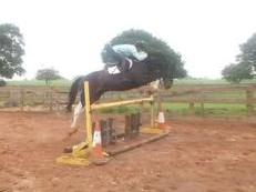 TOP QUALITY HOMEBRED ALLROUNDER/HUNTER