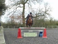 All Rounder horse - 8 yrs 10 mths 15.3 hh Bright Bay - Buckingham...