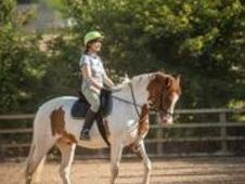 Superb All-rounder Horse For Sale West Yorkshire