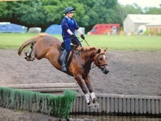 14. 1 Exceptional Chestnut Pony