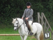 All Rounder horse - 13 yrs 1 mth 11.3 hh Grey - Derbyshire