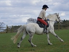 Mountain & Moorland horse - 10 yrs 14.2 hh Grey - Buckinghamshire