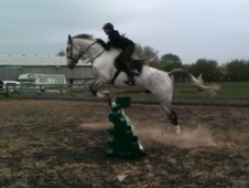 All Rounder horse - 9 yrs 8 mths 17.2 hh Grey - Merseyside