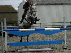 Show Jumpers horse - 10 yrs 15.3 hh Grey - Oxfordshire