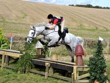 Stunning, 16. 2Hh, 9 year old, Grey, Irish Draught X Gelding
