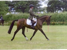 Dressage horse - 5 yrs 10 mths 15.3 hh Bay - Lincolnshire