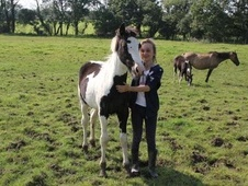 Young Stock  horse - 1 yr 15.2 hh Skewbald - Cornwall
