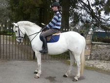 Dressage horse - 12 yrs 15.2 hh Dapple Grey - Lanarkshire