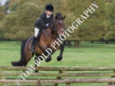 Fantastic all rounder/dressage/jumping pony for sale