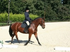 15.2hh beautiful bay mare allrounder to share with view to loan -...