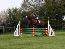 Eventers horse - 10 yrs 16.2 hh Chestnut - Suffolk