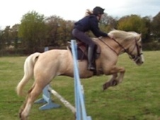 All Rounder horse - 10 yrs 14.1 hh Palomino - Cheshire