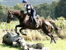 Quality All-Rounder/Eventer for sale