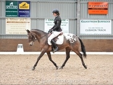 All Rounder horse - 6 yrs 14.2 hh Appaloosa - Nottinghamshire
