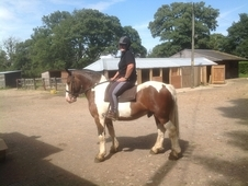 Just The Best Little Cob Now Reduced !