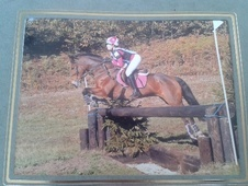 All Rounder horse - 14 yrs 3 mths 14.2 hh Bay - South Yorkshire