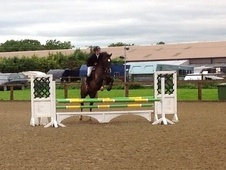 Show Jumpers horse - 10 yrs 7 mths 16.0 hh Dark Bay - Cheshire