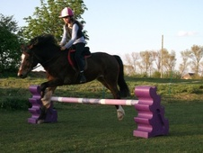 All Rounder horse - 12 yrs 1 mth 13.2 hh Dark Bay - Lincolnshire