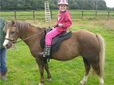 Lead Rein & First Ridden horse - 16 yrs 11.3 hh Chestnut - Devon