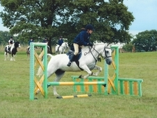 13. 2hh Grey Mare, Lovely Pony, Ellie