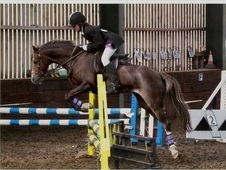 Small But Perfect Alrounder Fun Pony. Mother Daughter Share.