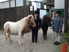 Miniatures horse - 3 yrs 39.0 hh Coloured - Somerset