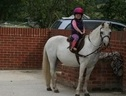 Lead Rein & First Ridden horse - 24 yrs 11.2 hh Grey - Wiltshire