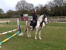 All Rounder horse - 6 yrs 5 mths 15.0 hh Lemon & White - West Sussex
