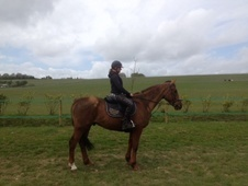 All Rounder horse - 7 yrs 5 mths 15.3 hh Chestnut - West Sussex