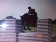 All Rounder horse - 9 yrs 16.1 hh Bay - Cheshire
