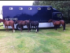 9 Horse Hgv Lorry