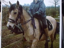 Riding Club Horses/Ponies horse - 13 yrs 2 mths 14.2 hh Dun - War...