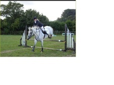 Horses and ponies for part and half loan - Kent
