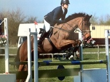 Show Jumpers horse - 7 yrs 16.2 hh Bay - Hampshire