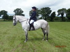Stunning Connemara mare, 14. 2hh 8yrs, Pony Club /Eventer.