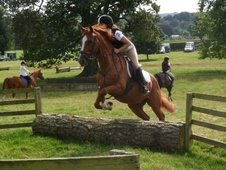 All Rounder horse - 13 yrs 15.0 hh Chestnut - Northumberland