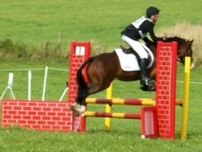 All Rounder horse - 8 yrs 2 mths 13.2 hh Bay - Lincolnshire