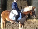 All Rounder horse - 10 yrs 5 mths 14.2 hh Liver Chestnut - Gloucestershire