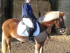 All Rounder horse - 10 yrs 5 mths 14.2 hh Liver Chestnut - Glouce...