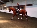 All Rounder horse - 7 yrs 2 mths 16.0 hh Chestnut - Essex