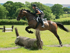 Price Massively Reduced To Sell -handsome 16hh Gelding For Sale