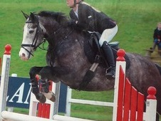 Show Jumper / All Rounder