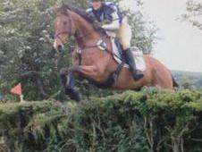ideal teenager horse genuine allrounder