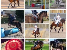 Top class allrounder/RC/BSJA/WHP/RC