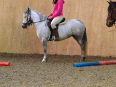 All Rounder horse - 6 yrs 1 mth 12.2 hh Grey - Suffolk
