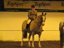 Cobs horse - 10 yrs 8 mths 15.0 hh Strawberry Roan - Lancashire