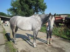 Julia: 15. 2hh ID cross mare, rising 10 yrs