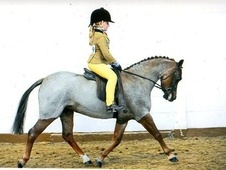 Super Lead Rein Pony - Chester