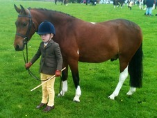 Ideal teenagers PC pony 13hh