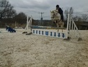 All Rounder horse - 5 yrs 14.2 hh Grey - West Sussex